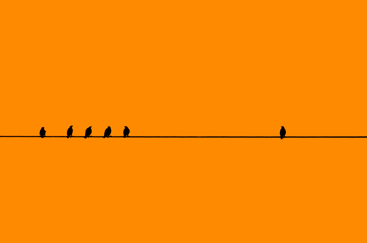 Birds In A Row With One By Itself.