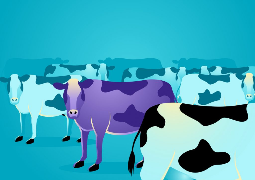 The Purple Cow class=