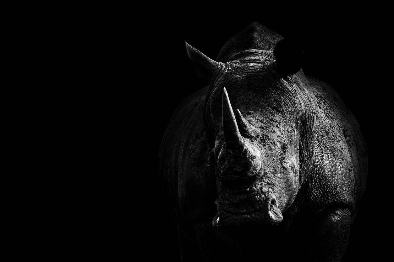 Rhino From Darkness